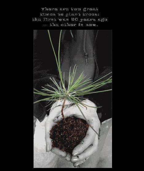 seedling pine in hands