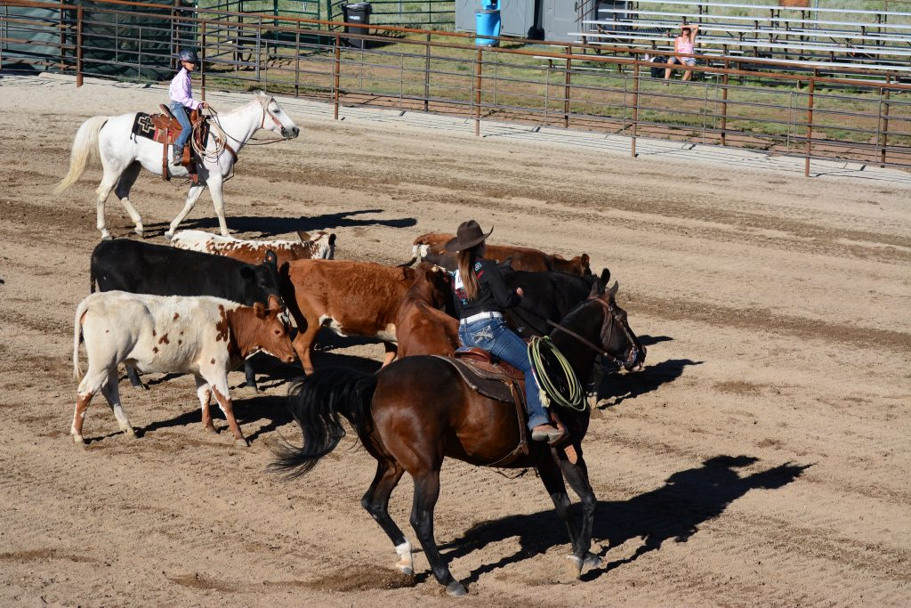 horse rider sorting cattle