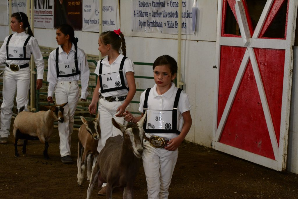 youth with goats in arena